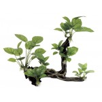ArtUniq Branched Driftwood with Anubias L2