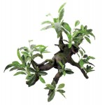ArtUniq Branched Driftwood with Anubias lanceolata
