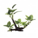 ArtUniq Branched Driftwood with Anubias M2
