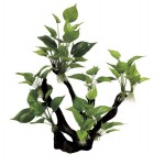 ArtUniq Branched Driftwood with Anubias M3