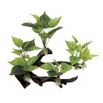 ArtUniq Branched Driftwood with Anubias M4