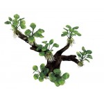 ArtUniq Branched Driftwood with Anubias nana M1