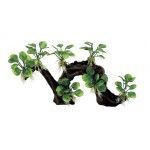 ArtUniq Branched Driftwood with Anubias nana M2