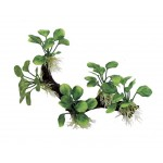 ArtUniq Branched Driftwood with Anubias nana M3