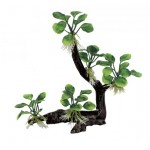 ArtUniq Branched Driftwood with Anubias nana M4