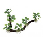 ArtUniq Branched Driftwood with Anubias nana M7