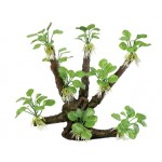ArtUniq Branched Driftwood with Anubias nana M8