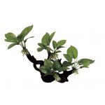 ArtUniq Branched Driftwood with Anubias S1