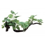 ArtUniq Branched Driftwood with Anubias XXL
